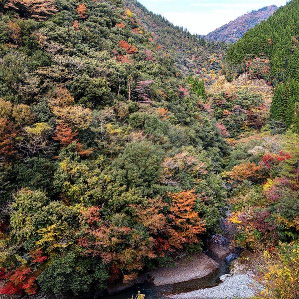 五木の紅葉